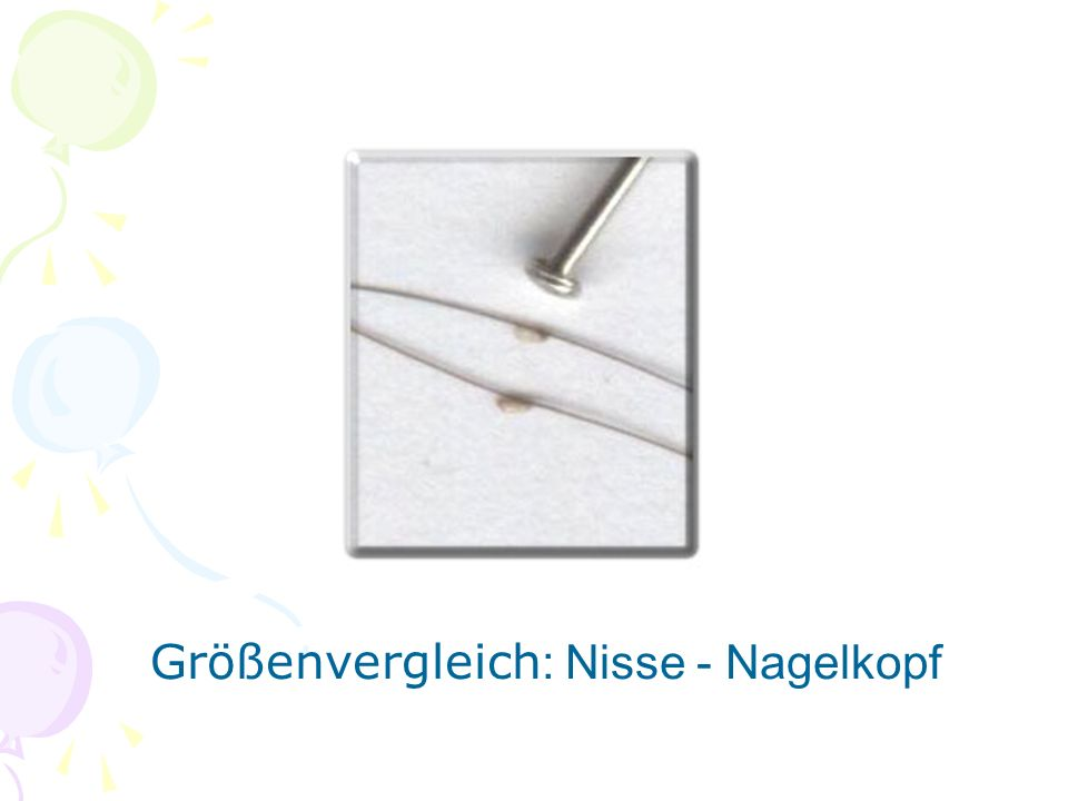 Größenvergleich: Nisse - Nagelkopf
