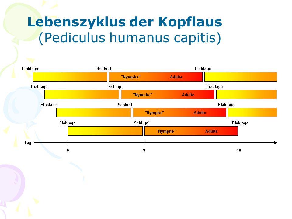 Lebenszyklus der Kopflaus (Pediculus humanus capitis)
