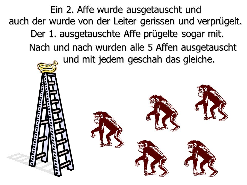 Ein 2. Affe wurde ausgetauscht und