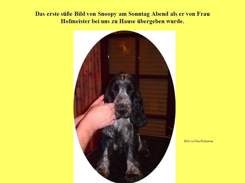 Das erste süße Bild von Snoopy am Sonntag Abend als er von Frau Hofmeister bei uns zu Hause übergeben wurde.
