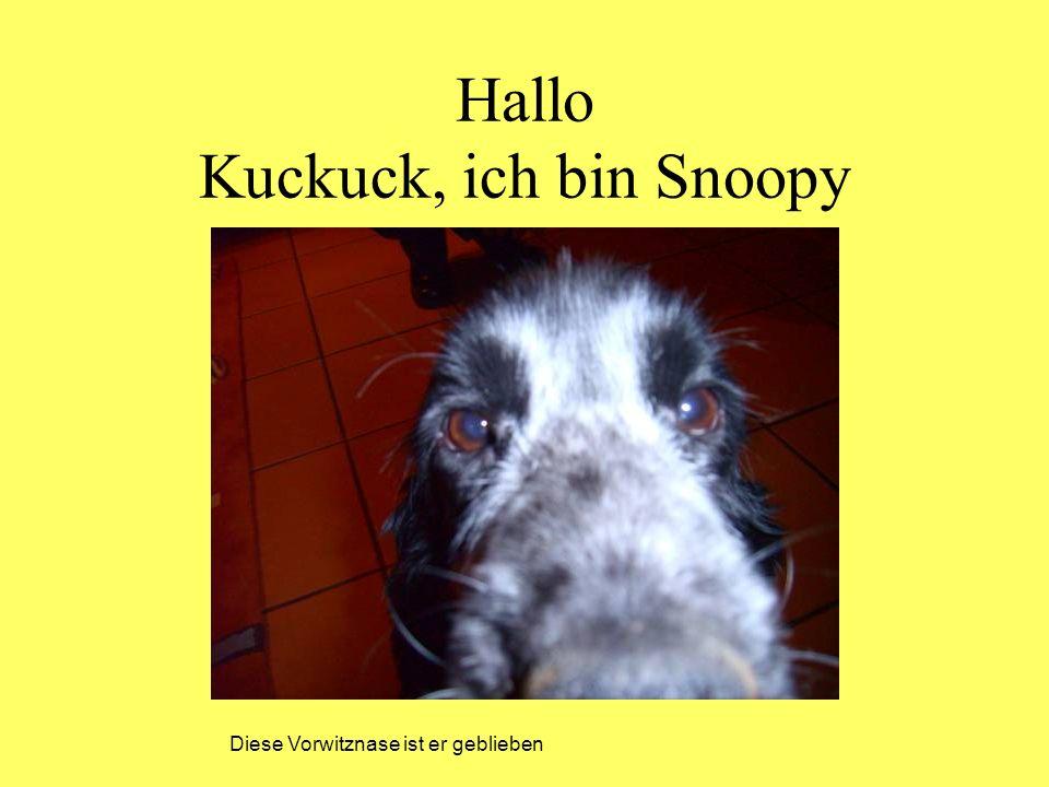 Hallo Kuckuck, ich bin Snoopy