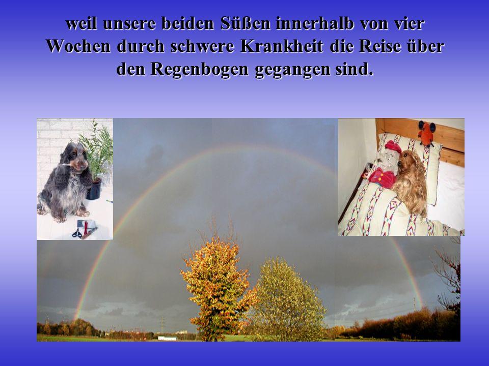 weil unsere beiden Süßen innerhalb von vier Wochen durch schwere Krankheit die Reise über den Regenbogen gegangen sind.