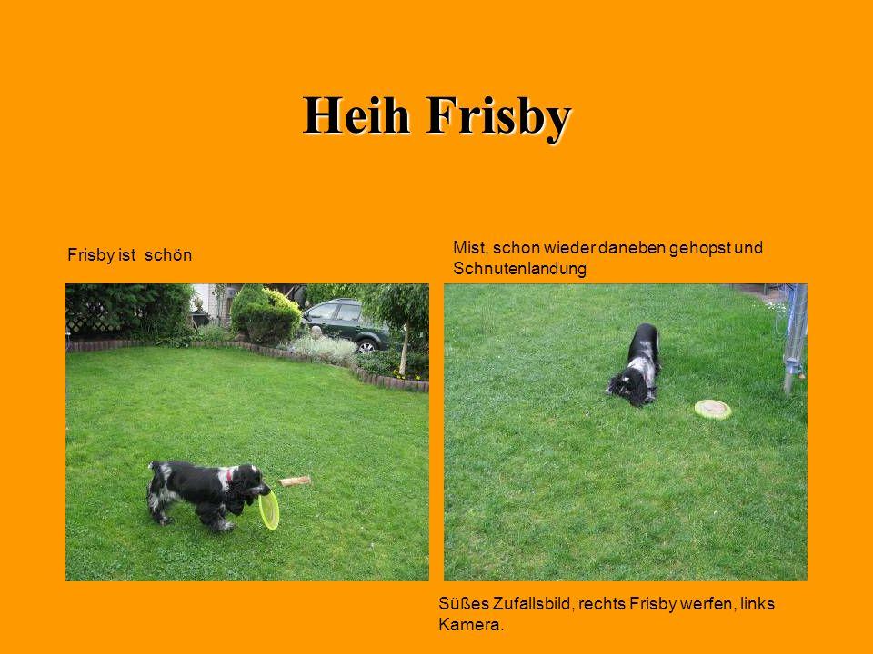 Heih Frisby Mist, schon wieder daneben gehopst und Schnutenlandung