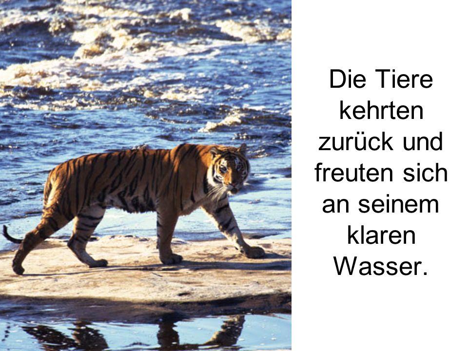 Die Tiere kehrten zurück und freuten sich an seinem klaren Wasser.