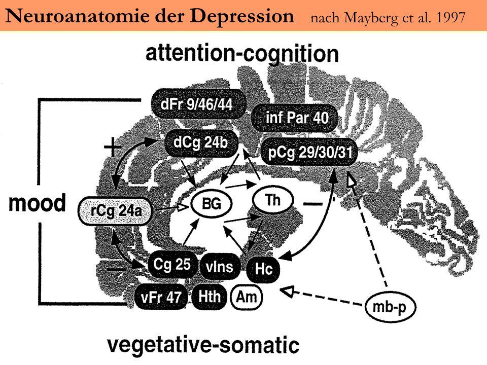 Neuroanatomie der Depression nach Mayberg et al. 1997