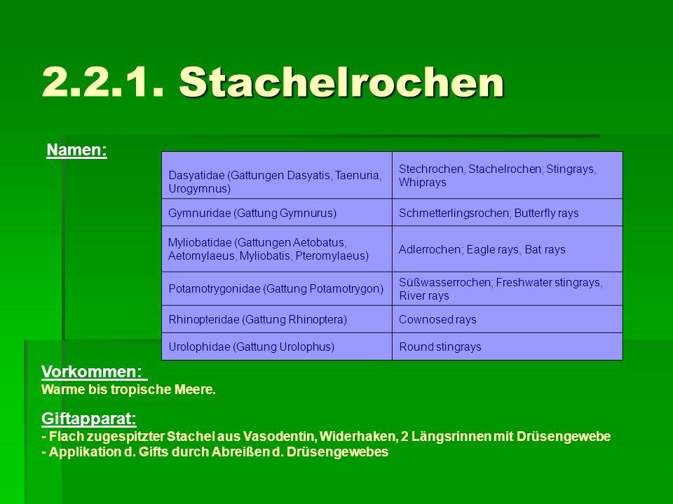 2.2.1. Stachelrochen Namen: Vorkommen: Giftapparat:
