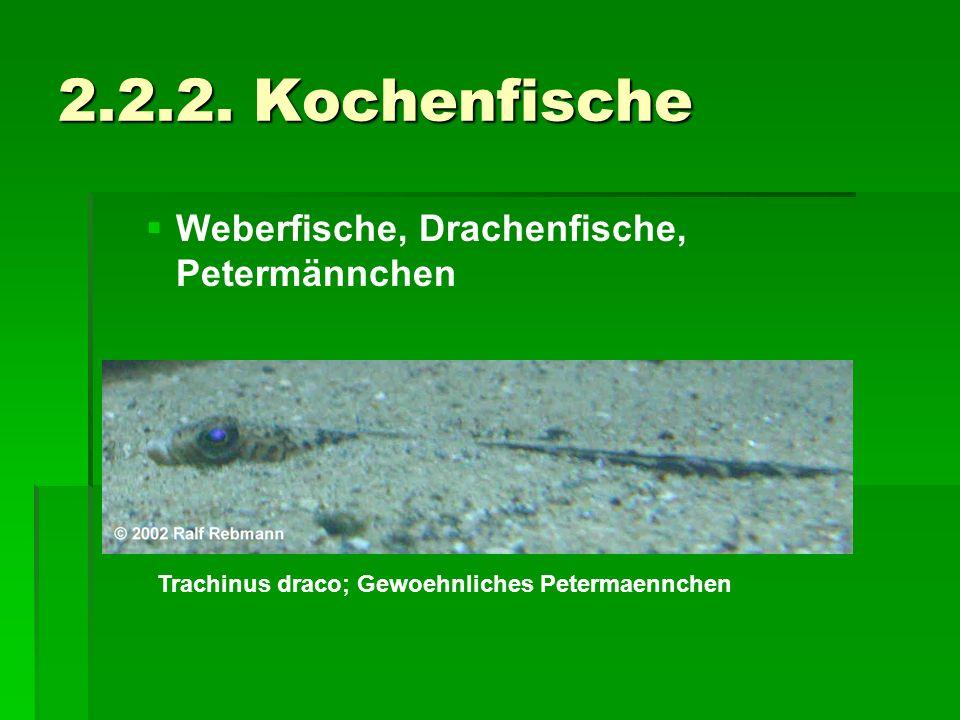 2.2.2. Kochenfische Weberfische, Drachenfische, Petermännchen