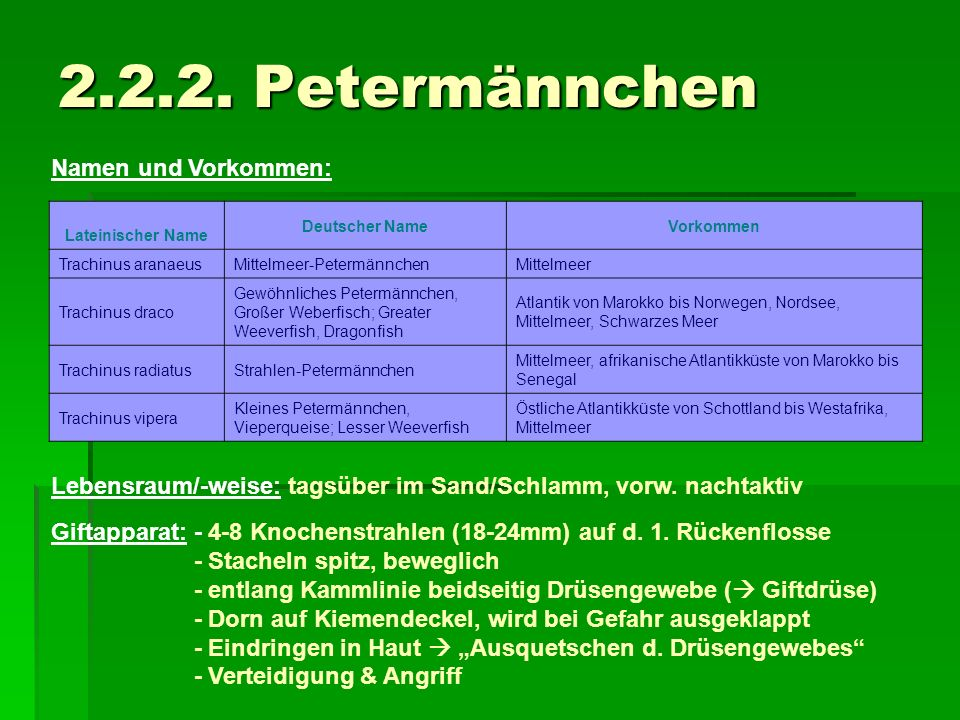 2.2.2. Petermännchen Namen und Vorkommen: