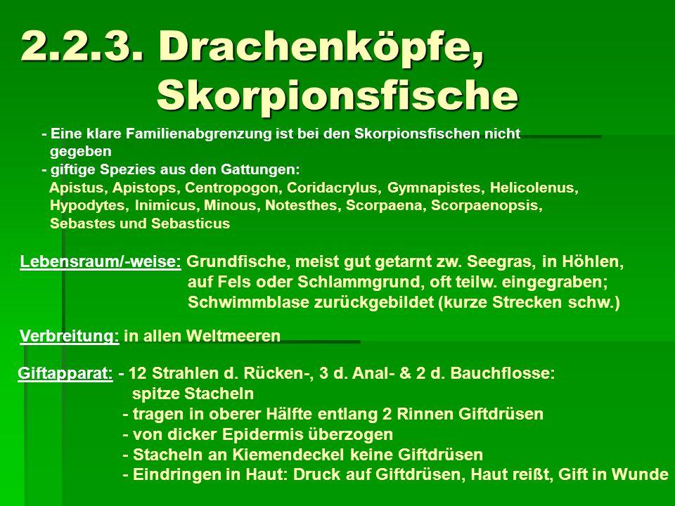 2.2.3. Drachenköpfe, Skorpionsfische