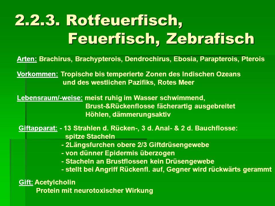 2.2.3. Rotfeuerfisch, Feuerfisch, Zebrafisch