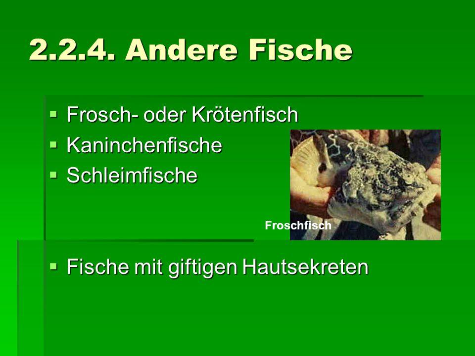2.2.4. Andere Fische Frosch- oder Krötenfisch Kaninchenfische