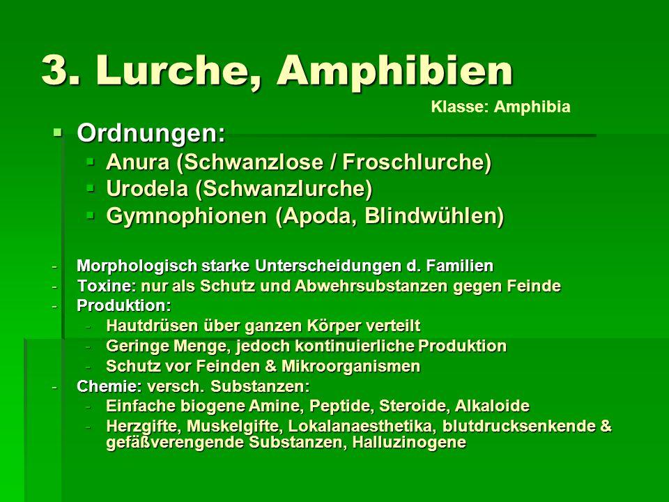 3. Lurche, Amphibien Ordnungen: Anura (Schwanzlose / Froschlurche)