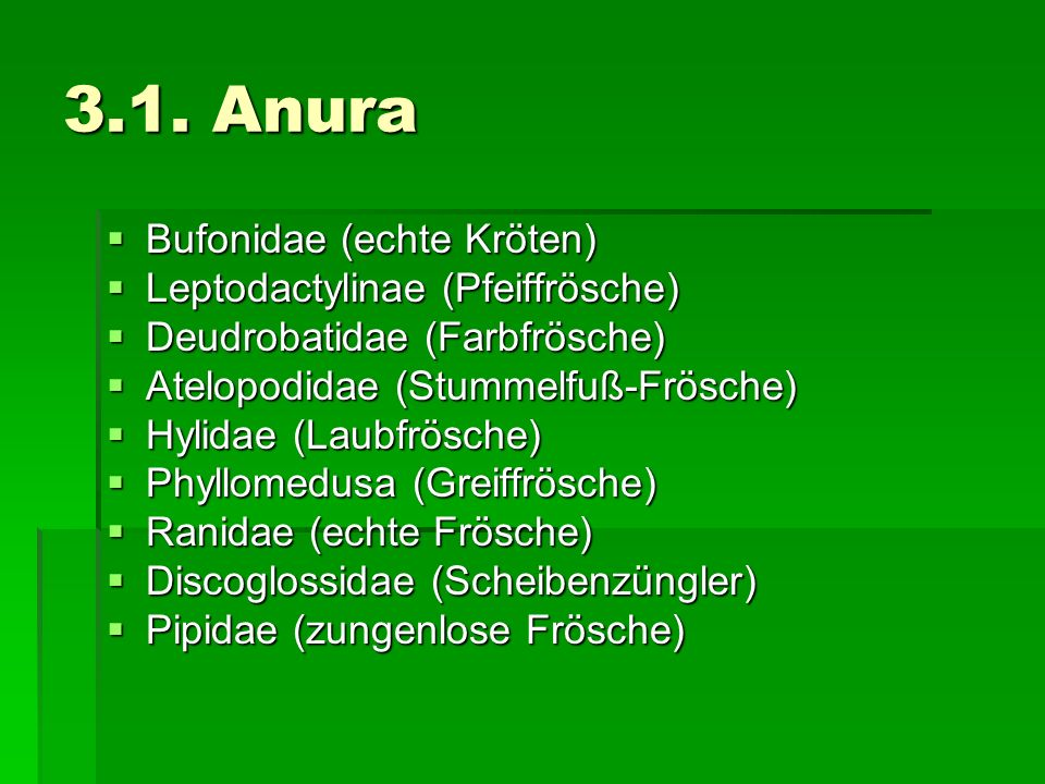 3.1. Anura Bufonidae (echte Kröten) Leptodactylinae (Pfeiffrösche)