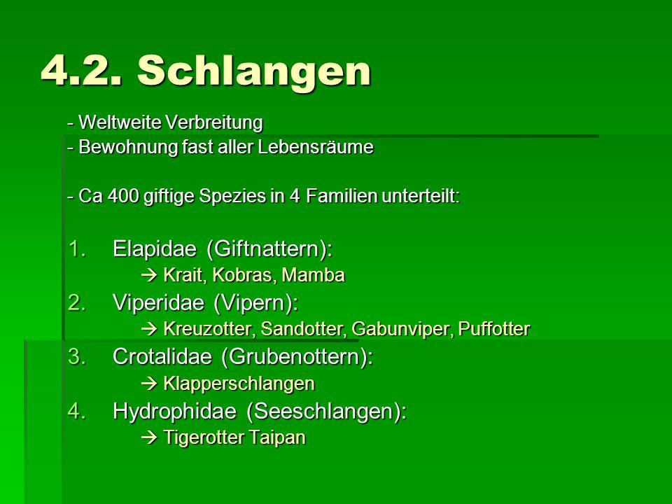 4.2. Schlangen Elapidae (Giftnattern): Viperidae (Vipern):