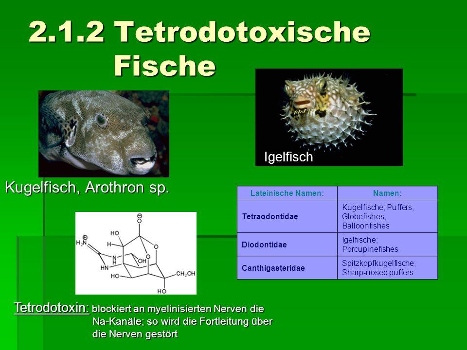 2.1.2 Tetrodotoxische Fische