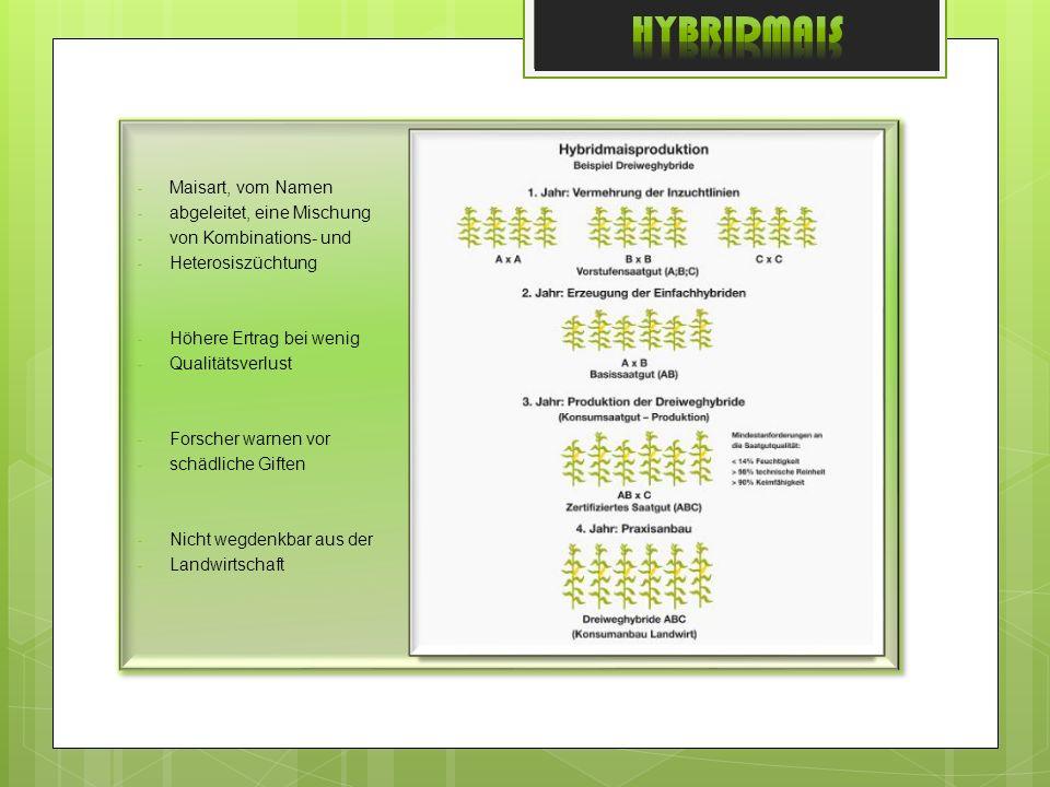 Hybridmais Maisart, vom Namen abgeleitet, eine Mischung