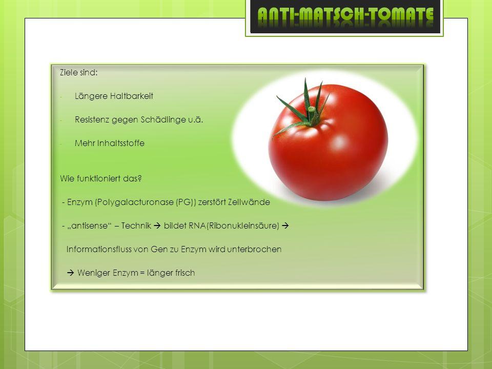 ANTI-MATSCH-Tomate Ziele sind: Längere Haltbarkeit