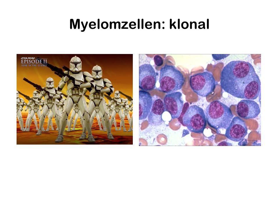 Myelomzellen: klonal