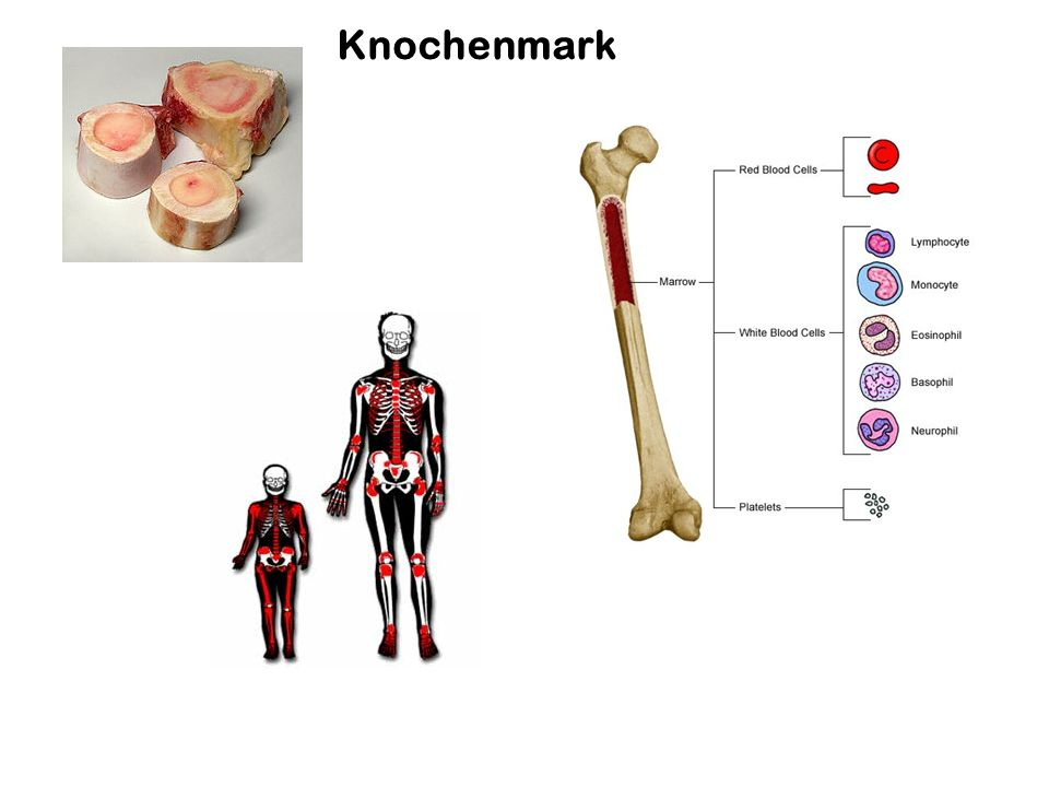 Knochenmark