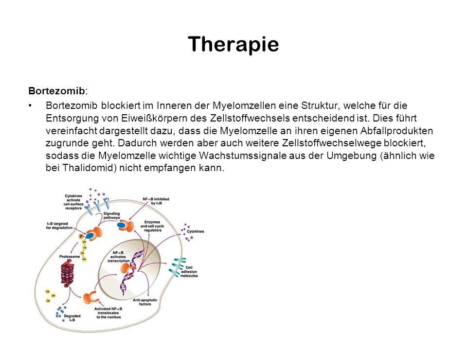 Therapie Bortezomib: