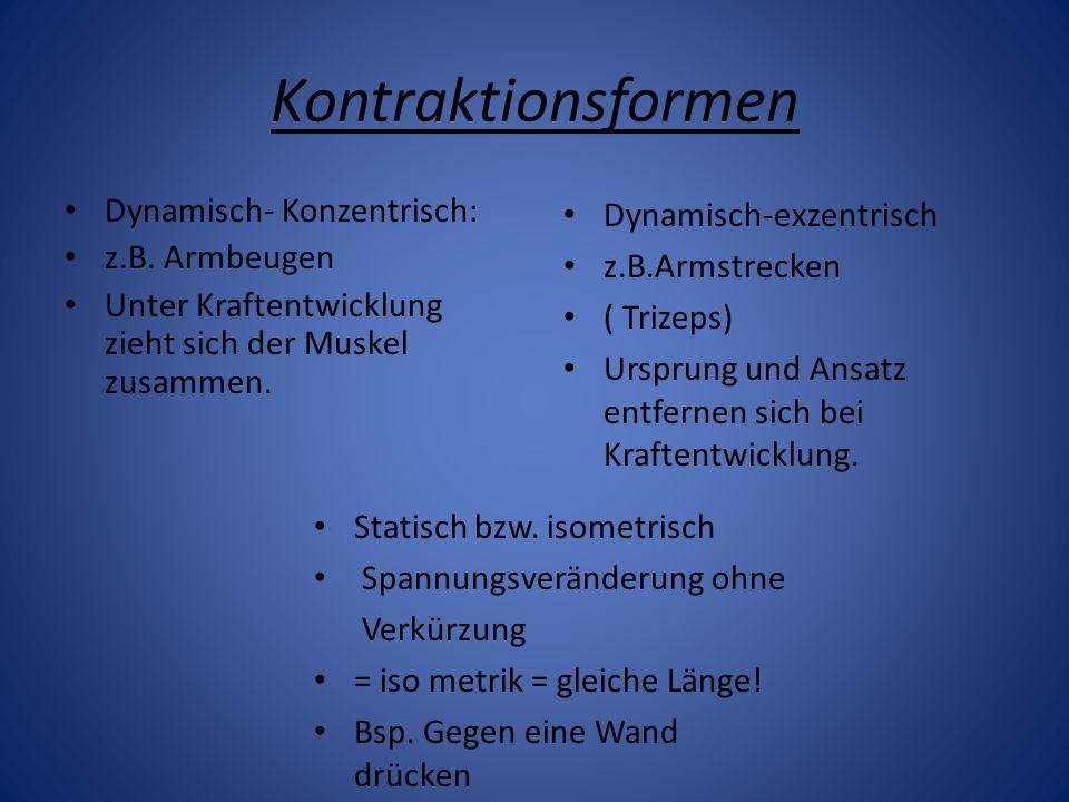 Kontraktionsformen Dynamisch- Konzentrisch: z.B. Armbeugen