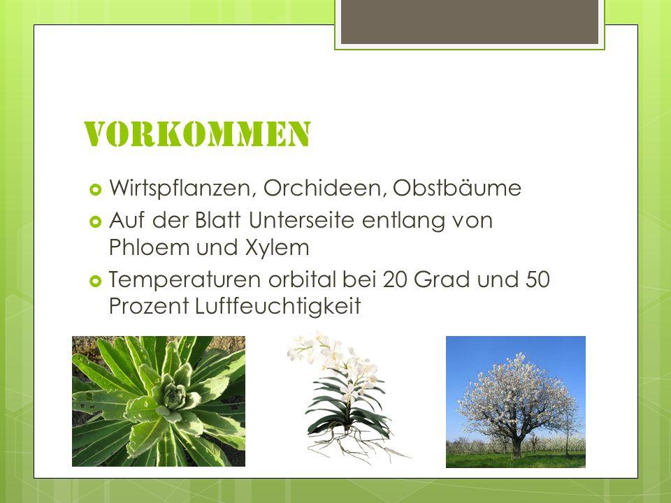 Vorkommen Wirtspflanzen, Orchideen, Obstbäume