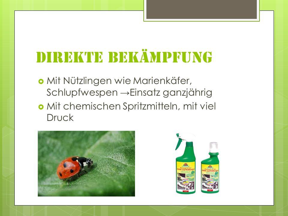 Direkte Bekämpfung Mit Nützlingen wie Marienkäfer, Schlupfwespen →Einsatz ganzjährig.