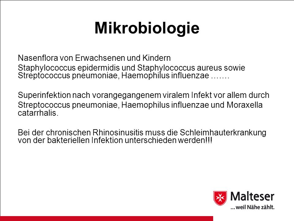 Mikrobiologie Nasenflora von Erwachsenen und Kindern