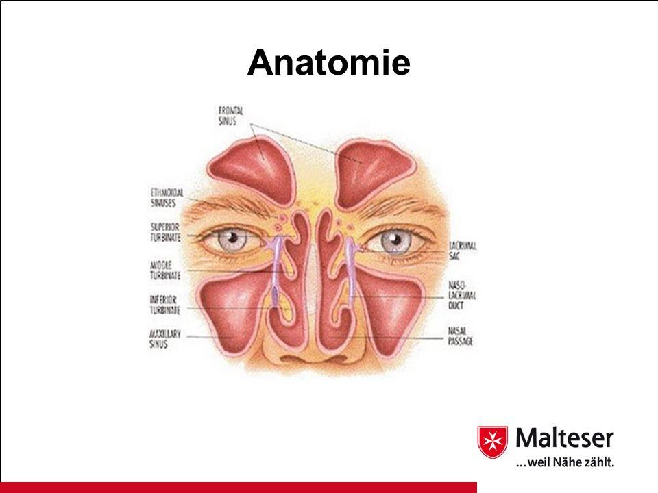Ziemlich Anatomie Der Nasennebenhöhlen Und Ohren Fotos - Menschliche ...