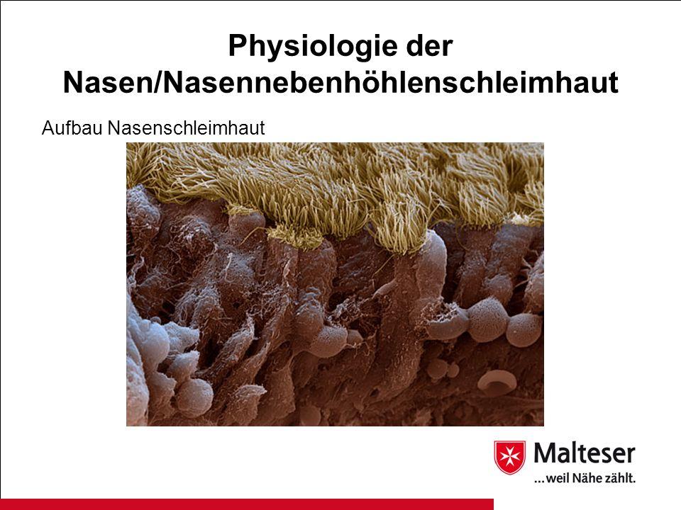 Physiologie der Nasen/Nasennebenhöhlenschleimhaut