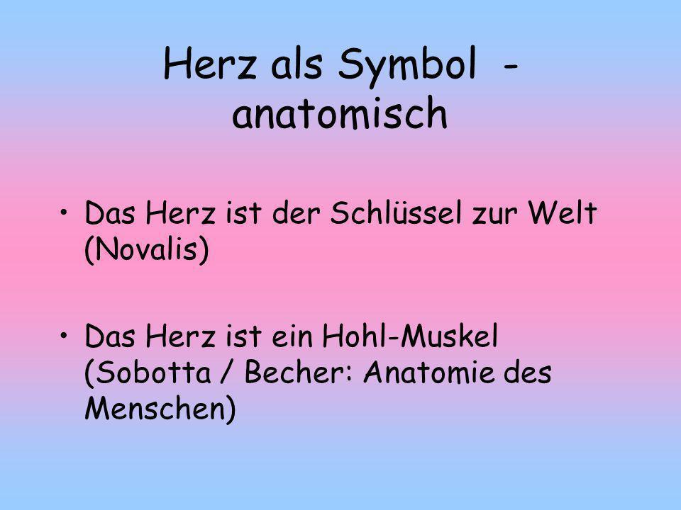 Herz als Symbol - anatomisch