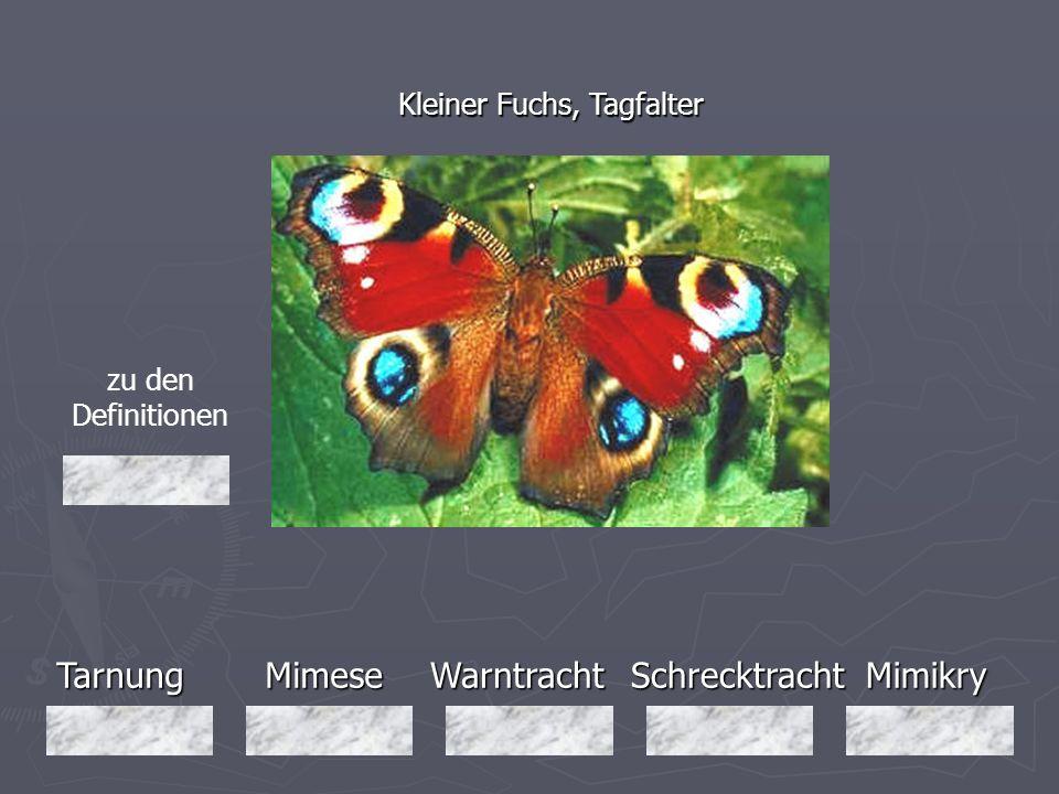 Tarnung Mimese Warntracht Schrecktracht Mimikry