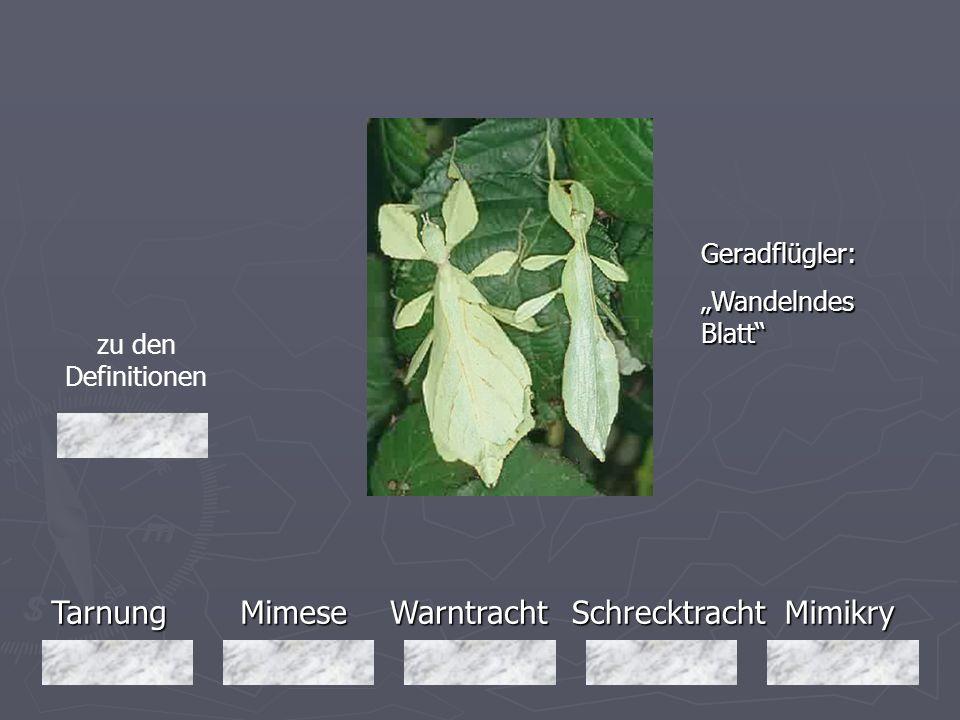 Tarnung Mimese Warntracht Schrecktracht Mimikry Geradflügler: