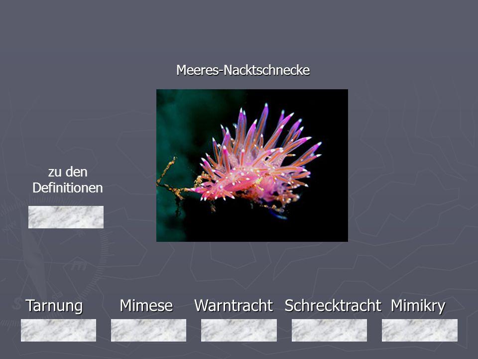 Tarnung Mimese Warntracht Schrecktracht Mimikry Meeres-Nacktschnecke