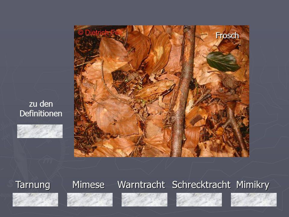 Tarnung Mimese Warntracht Schrecktracht Mimikry Frosch