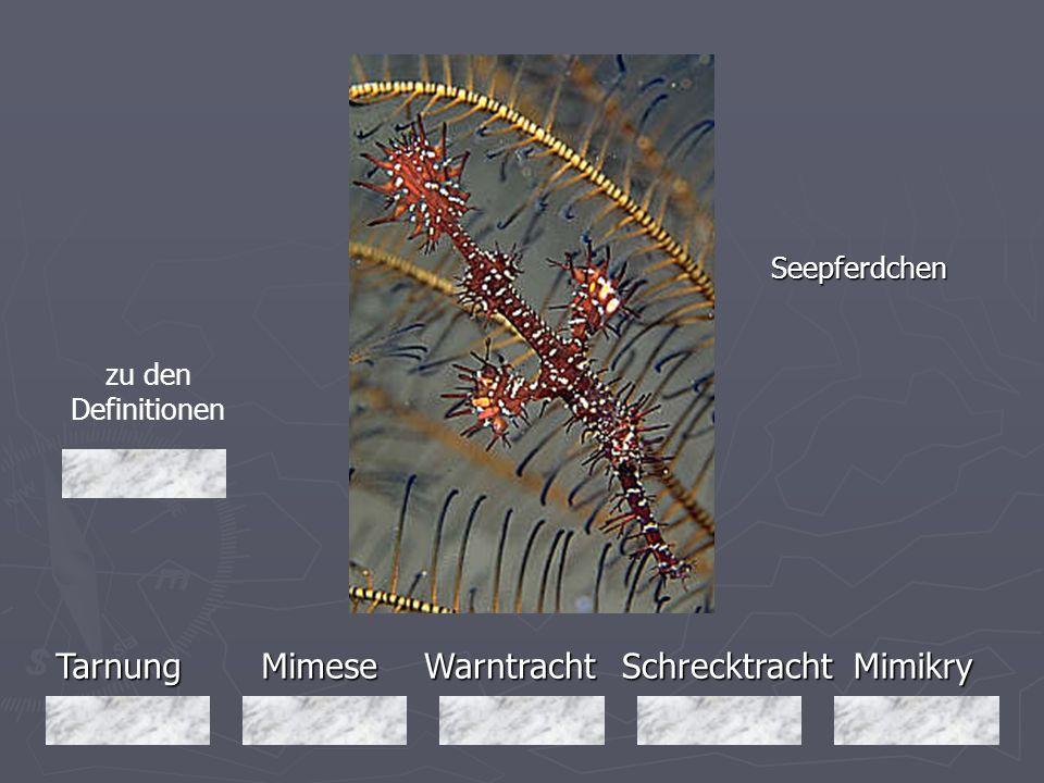 Tarnung Mimese Warntracht Schrecktracht Mimikry Seepferdchen