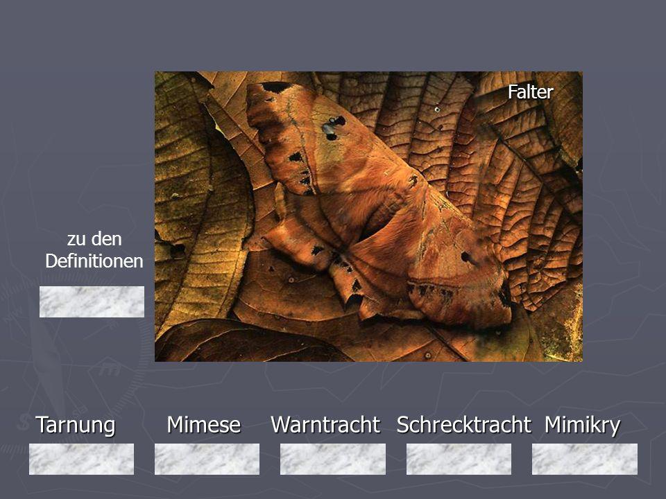 Tarnung Mimese Warntracht Schrecktracht Mimikry Falter