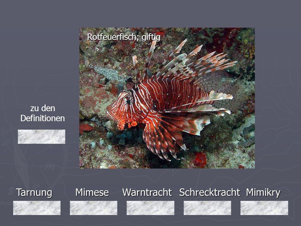 Tarnung Mimese Warntracht Schrecktracht Mimikry Rotfeuerfisch; giftig