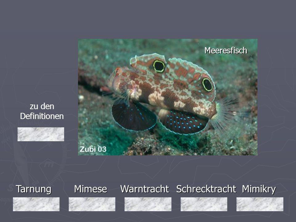 Tarnung Mimese Warntracht Schrecktracht Mimikry Meeresfisch