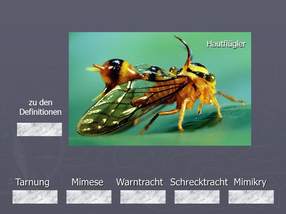 Tarnung Mimese Warntracht Schrecktracht Mimikry Hautflügler