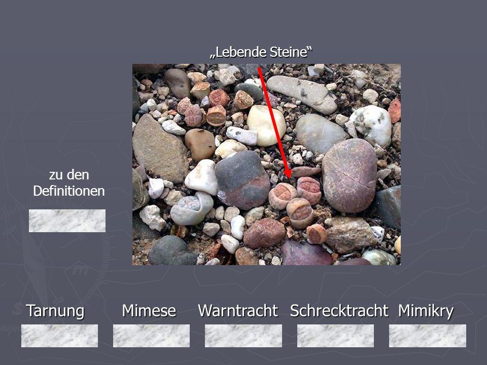 """Tarnung Mimese Warntracht Schrecktracht Mimikry """"Lebende Steine"""