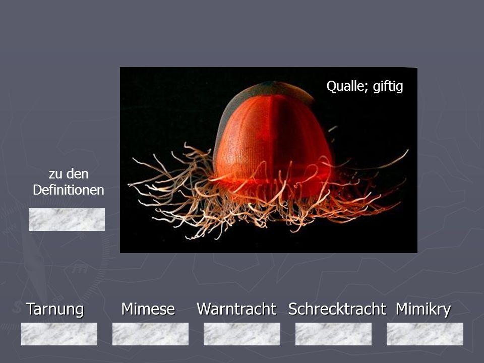 Tarnung Mimese Warntracht Schrecktracht Mimikry Qualle; giftig