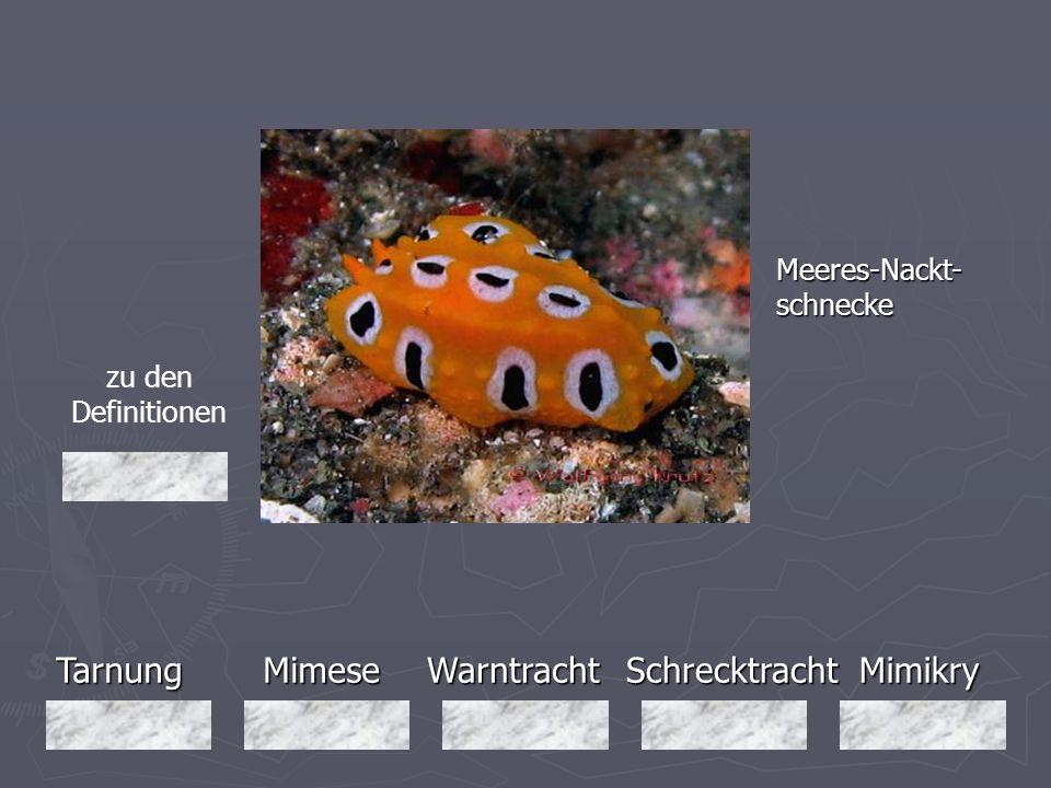 Tarnung Mimese Warntracht Schrecktracht Mimikry Meeres-Nackt-schnecke