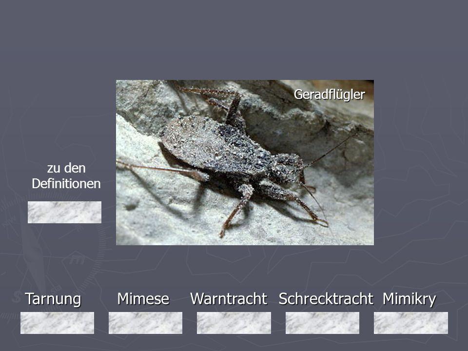 Tarnung Mimese Warntracht Schrecktracht Mimikry Geradflügler