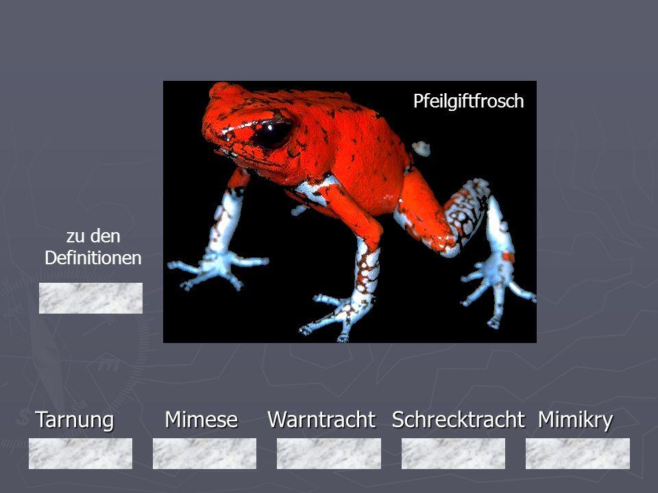 Tarnung Mimese Warntracht Schrecktracht Mimikry Pfeilgiftfrosch