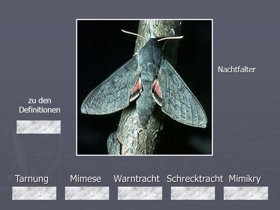 Tarnung Mimese Warntracht Schrecktracht Mimikry Nachtfalter