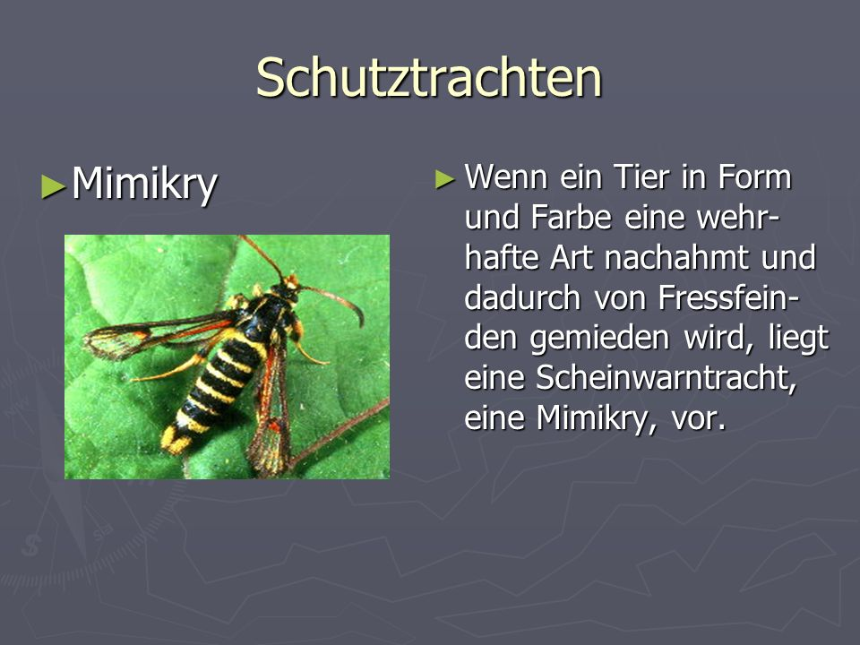 Schutztrachten Mimikry