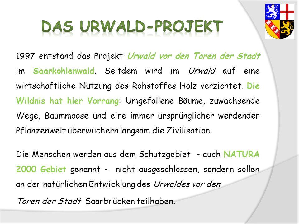 Das Urwald-Projekt