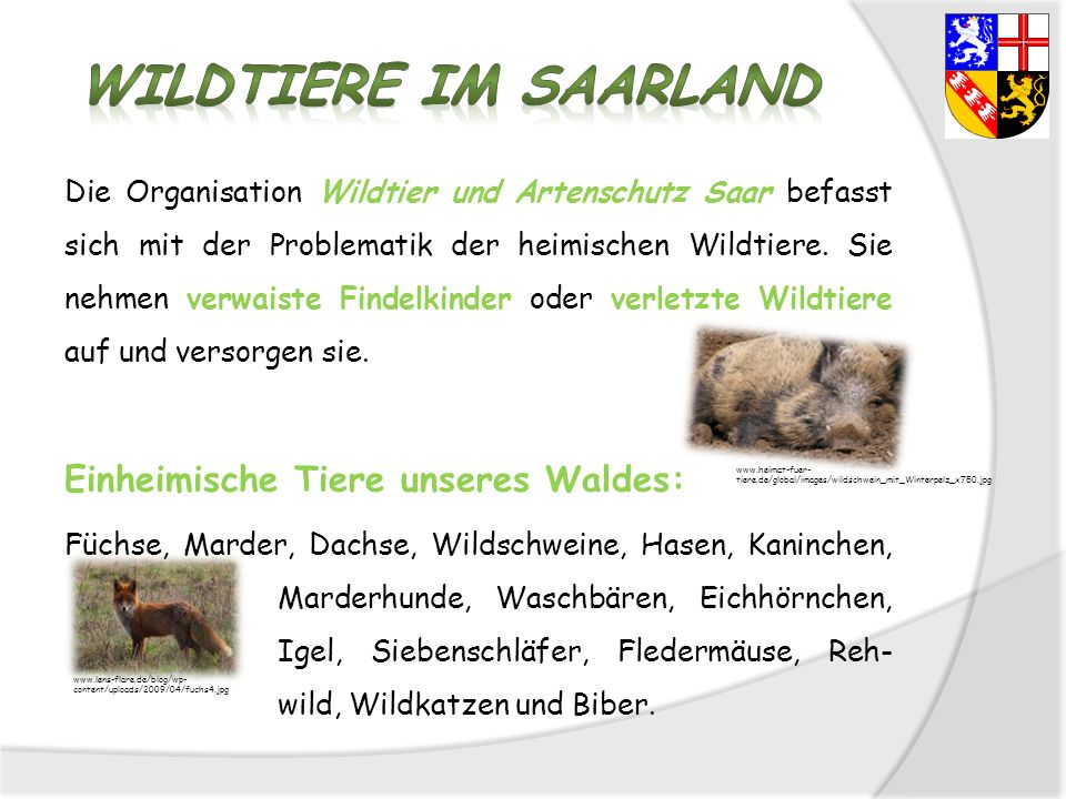 Wildtiere im Saarland Einheimische Tiere unseres Waldes: