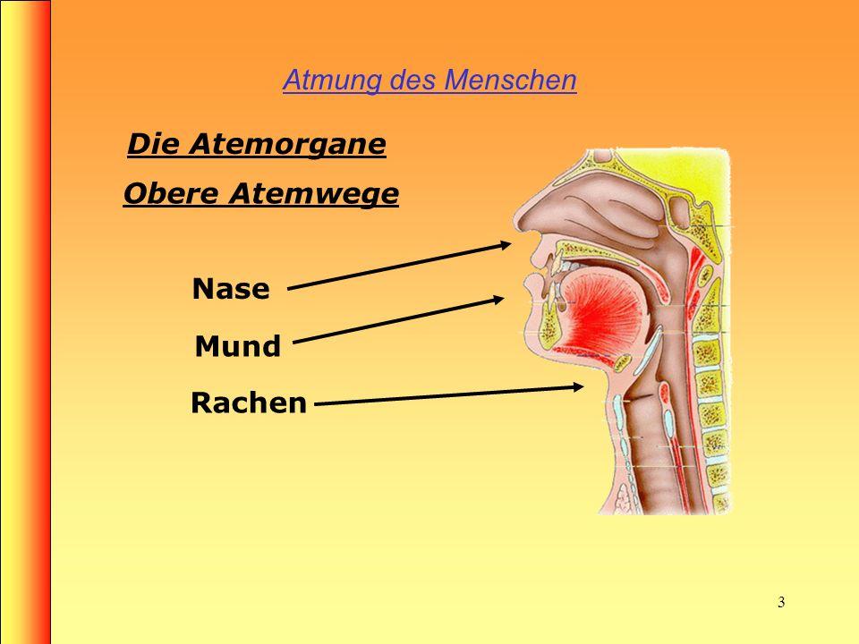 Ungewöhnlich Funktion Der Membran In Die Atemwege Fotos ...